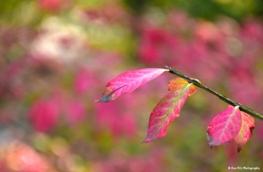 tuxpi.com.1507440819.jpg