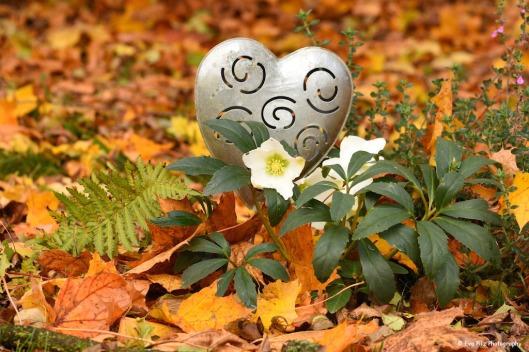 tuxpi.com.1509355550.jpg
