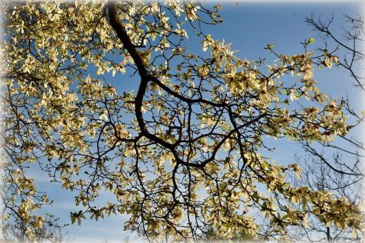 tuxpi.com.1523761324.jpg