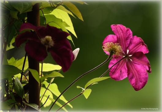tuxpi.com.1529816340.jpg