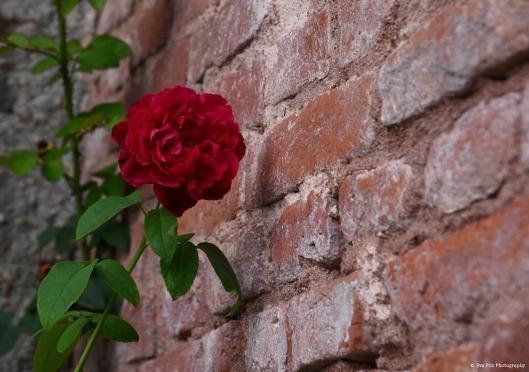 tuxpi.com.1538899110.jpg