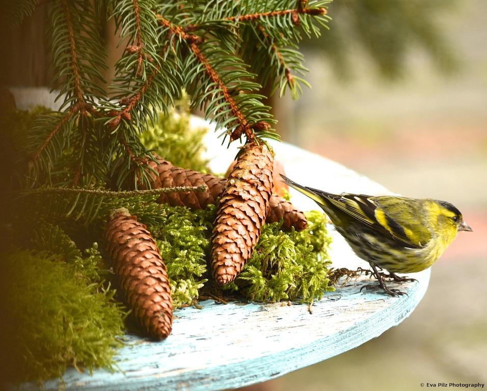tuxpi.com.1549397110.jpg