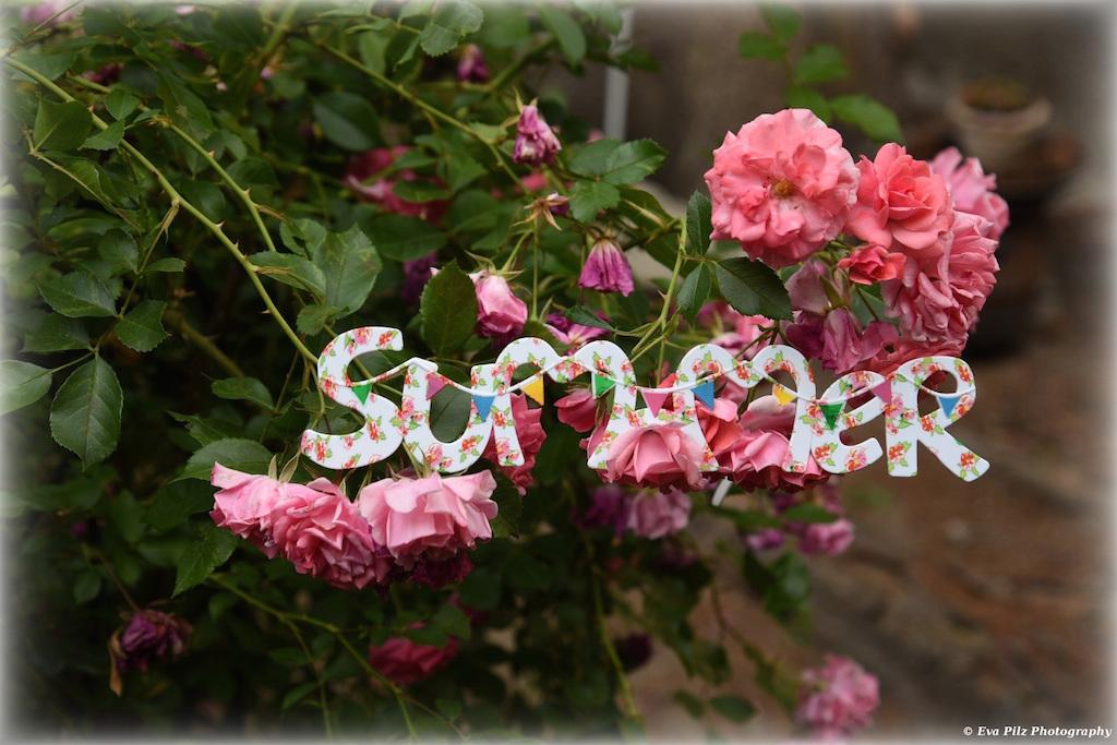 tuxpi.com.1561096410.jpg
