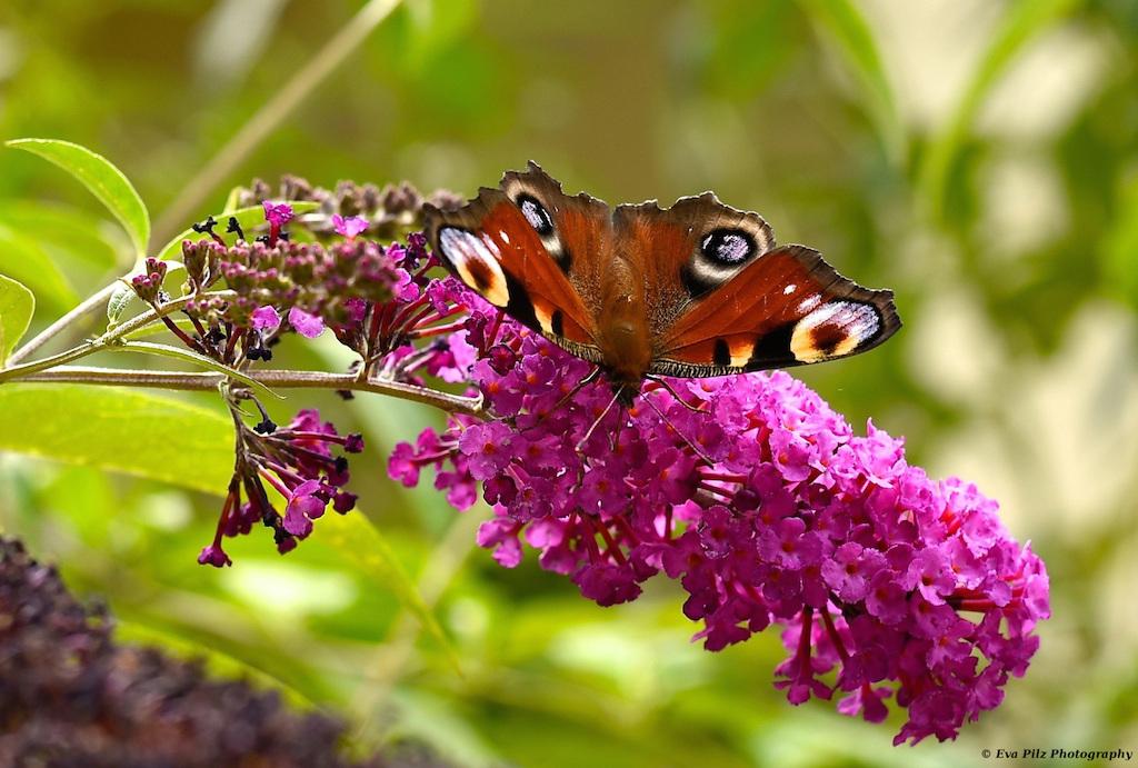 tuxpi.com.1566019784.jpg